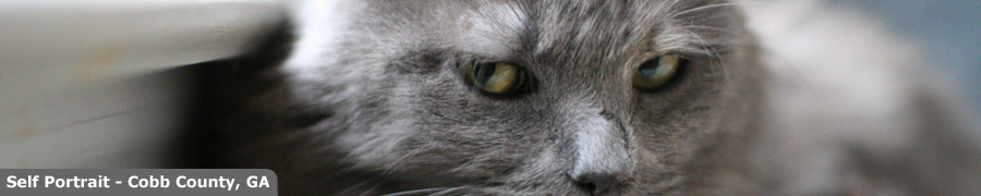 The Evil Eyebrow Header Image